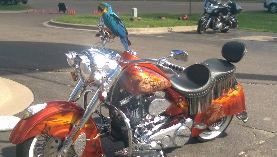 A custom Indian bike, with parrot